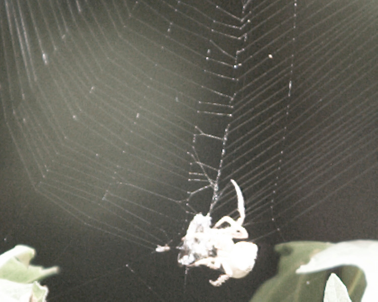 Spider BW at Sanborn Park Sept 3, 2006