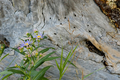 Flower and drift wood