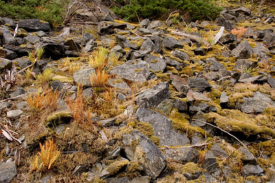 Can you find the Pika? I'll give a hint - it is hiding in deep shadows and can't be seen.