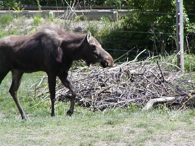 Columbus Zoo 2006