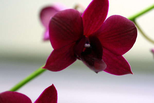 Anniversary Flowers 027.JPG