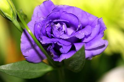 Anniversary Flowers 014.JPG