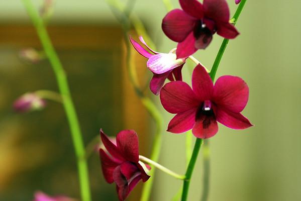 Anniversary Flowers 024.JPG