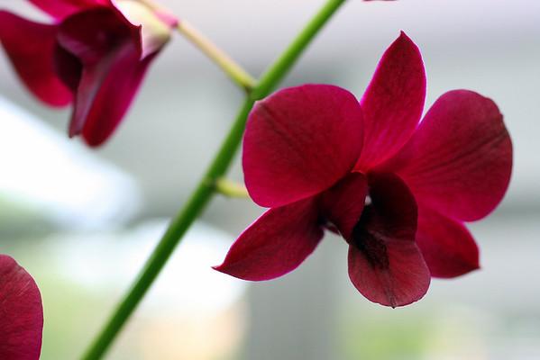 Anniversary Flowers 026.JPG