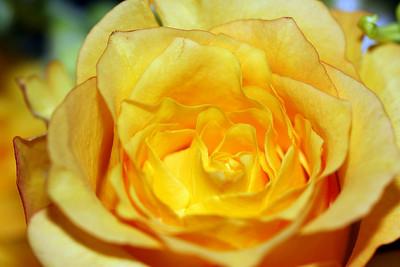Anniversary Flowers 007.JPG
