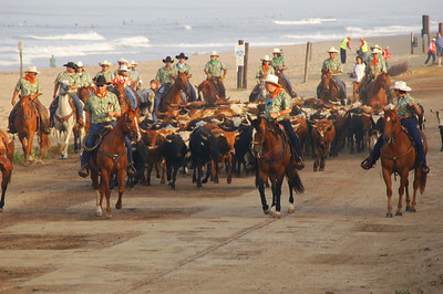 Orange County Fair Cattle Drive
