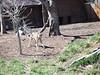 Denver Zoo Visit Sunday, March 25,2007 (23)
