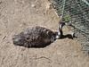 Denver Zoo Visit Sunday, March 25,2007 (21)