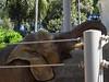 Elephants-1