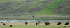 Yellowstone National Park,  July 2007-1