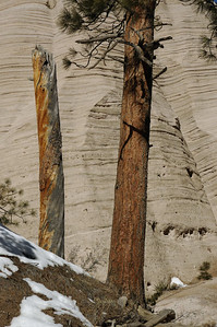 Trees at Tent Rock