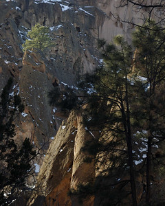 Tree on Cliff at Bandelier NM