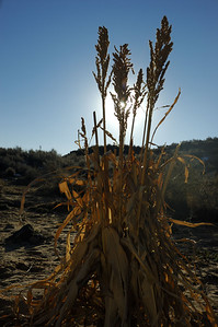 Plant at Petroglyph National Monument