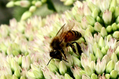 Closeup of the wasp (or bee, or whatever it is).