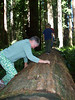 Oma Irene attempting to climb this fallen tree.