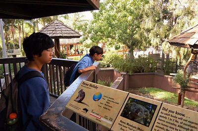 1/12/2008 - San Diego Zoo