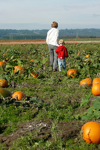 Gavin and Kathy searching for pumpkins Pumpkin patch