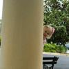 Peek a Boo  03