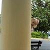 Peek a Boo  02