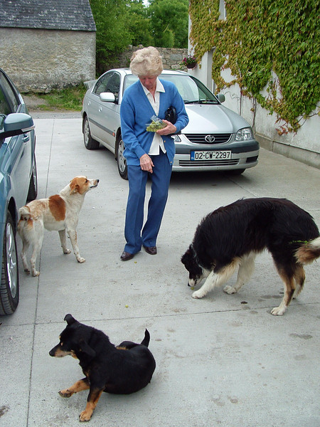Mary feeding the Dogs