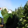 2009 Christmas Tree Hunt