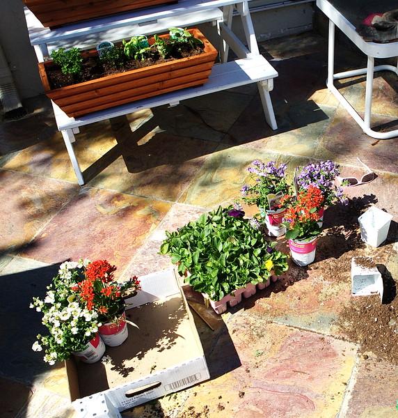 Gardening March 2009 - 8995