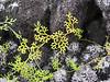 9  sphagnum moss