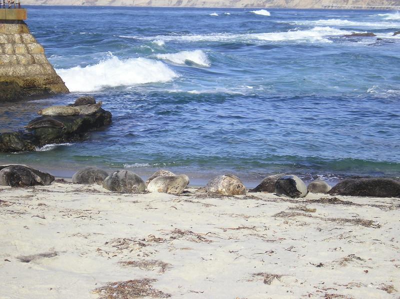 San Diego 2009 027