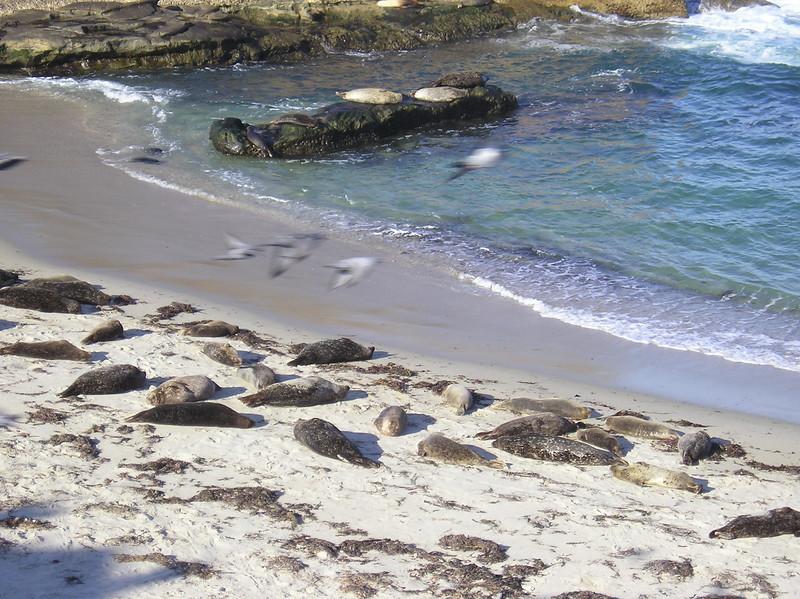 San Diego 2009 023
