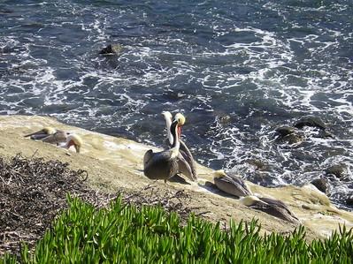 San Diego 2009 006