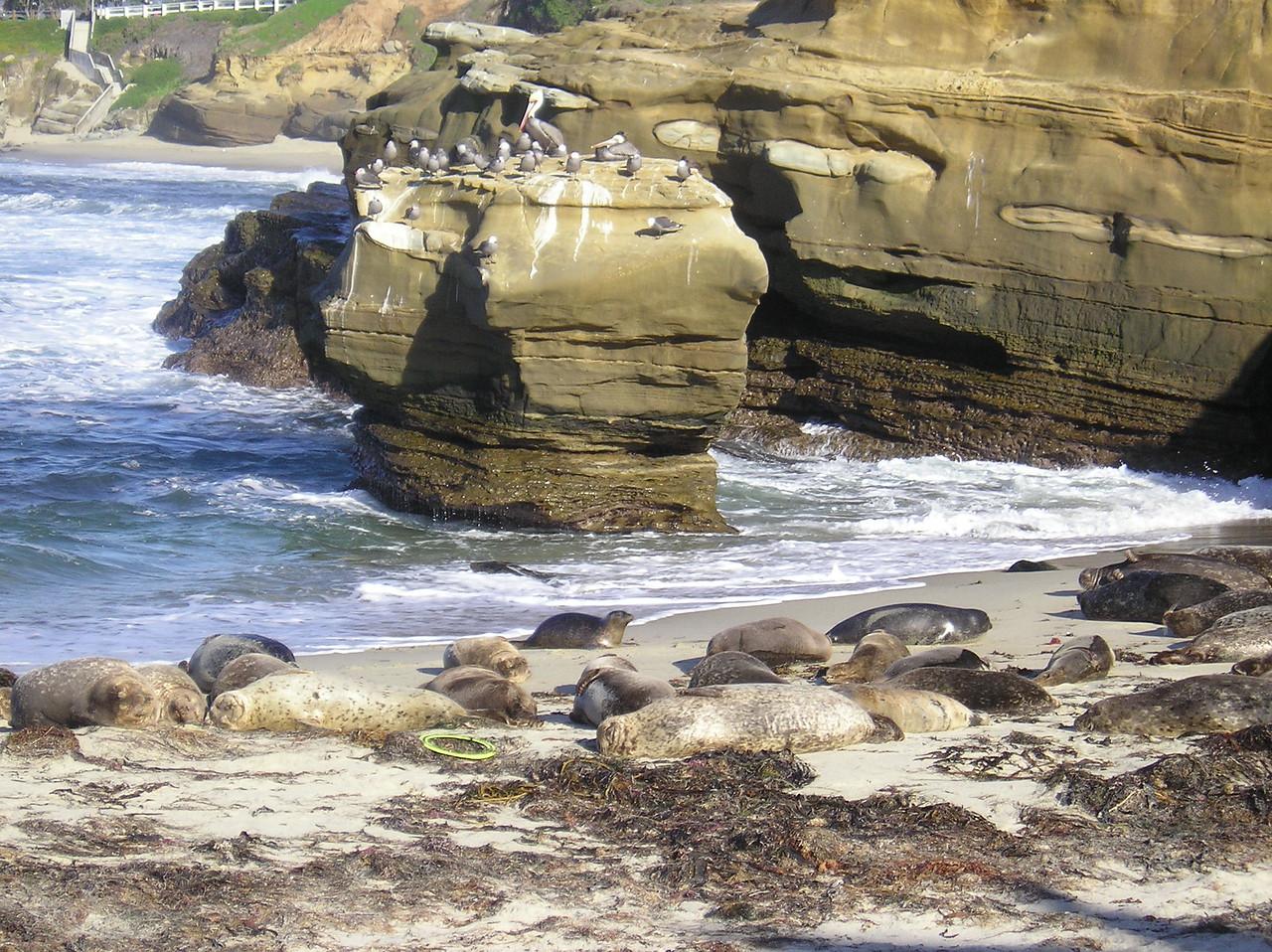 San Diego 2009 025
