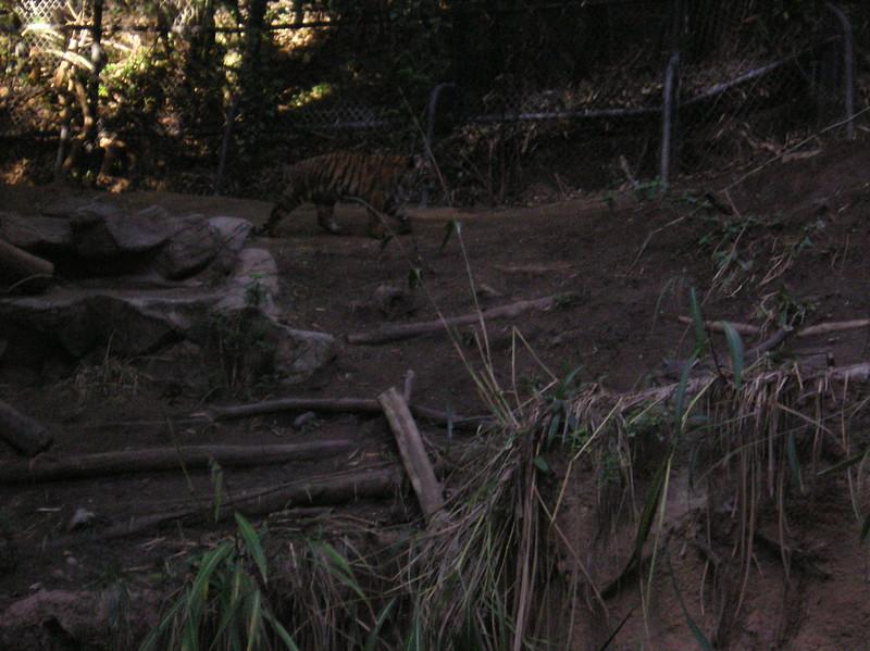 San Diego 2009 070