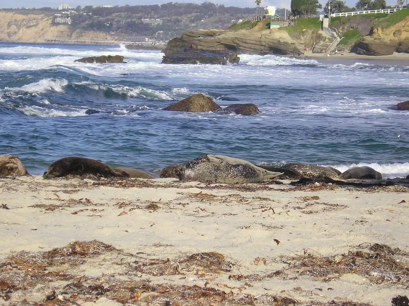 San Diego 2009 028