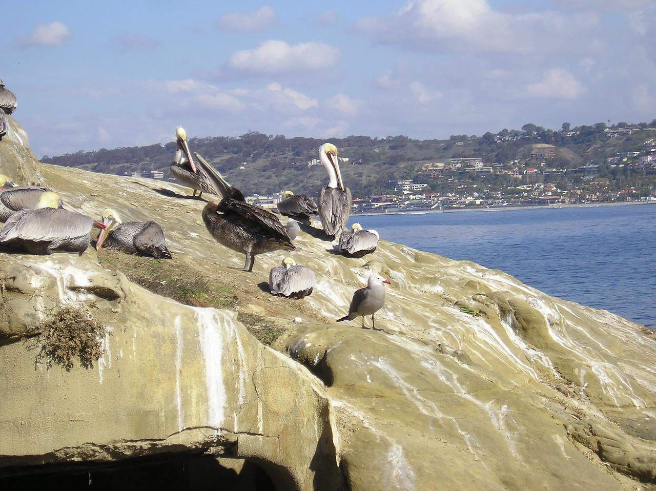 San Diego 2009 009