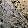 Climbing - 5002