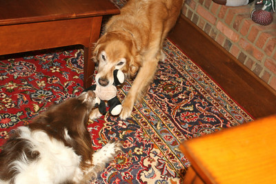 Blizzard and Gopher tussle over the panda toy