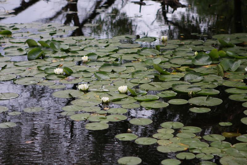 7/07/09 Arboretum