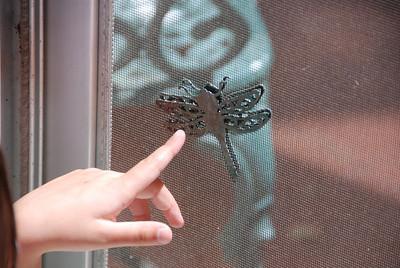 Big dragonfly!