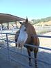 Calero Ranch 0006