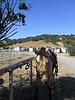 Calero Ranch 0002
