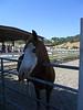 Calero Ranch 0005