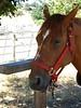 Calero Ranch 0004
