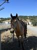 Calero Ranch 0003