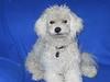Doggy Studio 0389
