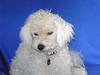 Doggy Studio 0388