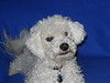 Doggy Studio 0387