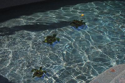 pool remodel (67)