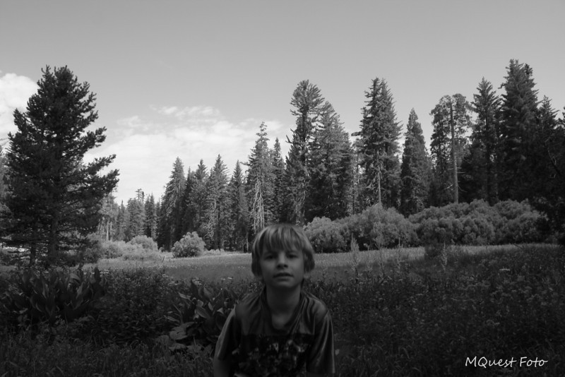 sequoia meadow