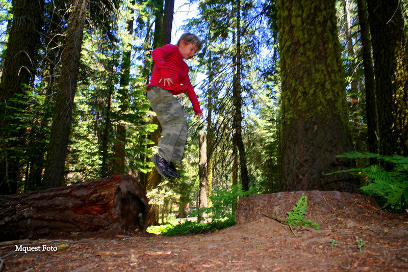 Jr in Sequoia National Park (jump)