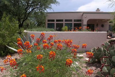 Arizona August